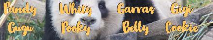 nombres peluches panda