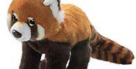 panda rojo 4